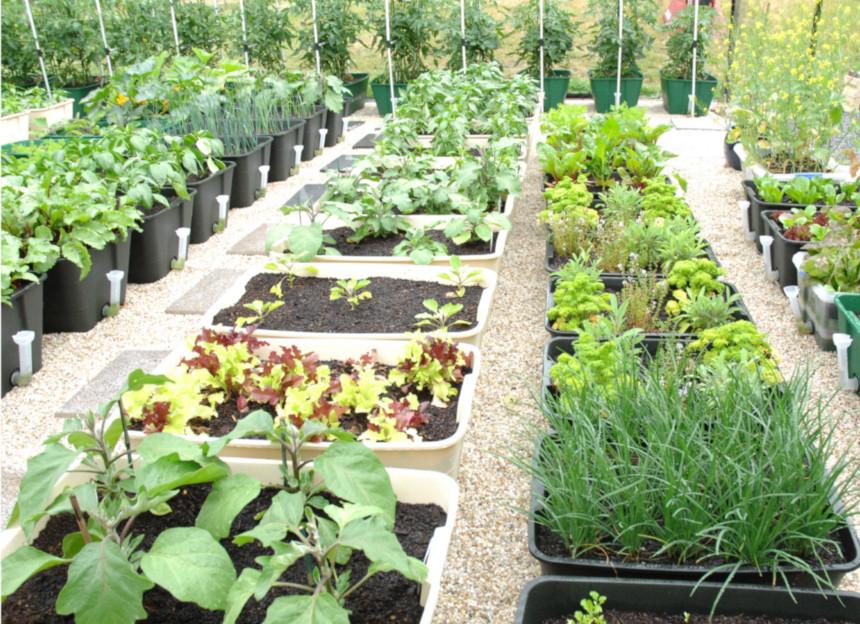 GreenSmart Planting Tips